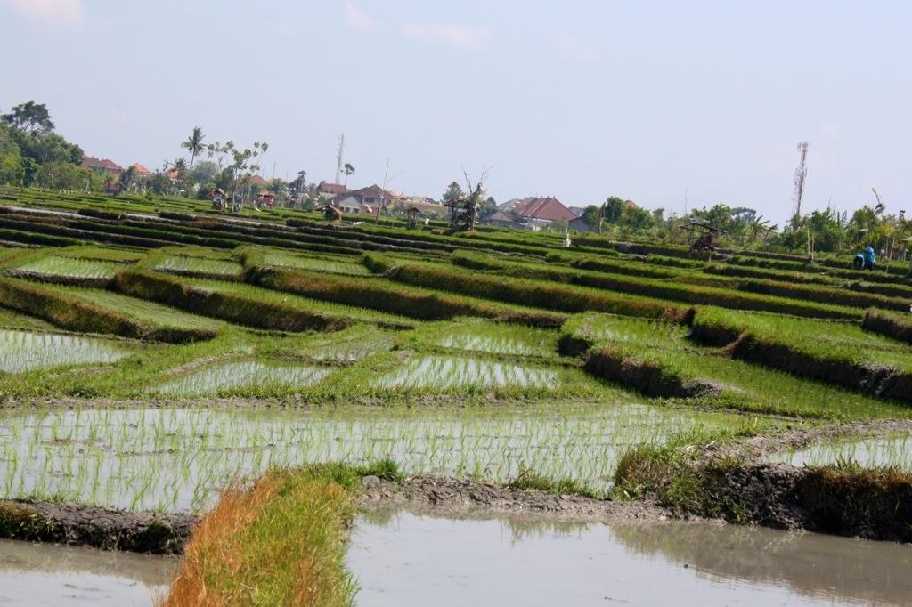Bali, oh Bali